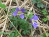 03-mars-fleurs-2013-3