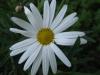 04-avril-fleurs-2013-10