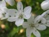 04-avril-fleurs-2013-11