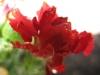04-avril-fleurs-2013-18
