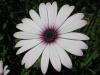 04-avril-fleurs-2013-21