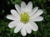 04-avril-fleurs-2013-22