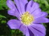 04-avril-fleurs-2013-23