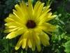 04-avril-fleurs-2013-27