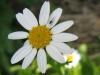 04-avril-fleurs-2013-28
