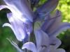 04-avril-fleurs-2013-29