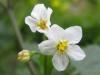 04-avril-fleurs-2013-32