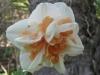 04-avril-fleurs-2013-7
