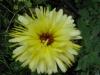 05-mai-fleurs-2013-17