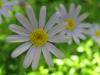 11-novembre-fleurs-2012-14