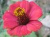 11-novembre-fleurs-2012-15