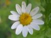 11-novembre-fleurs-2012-16