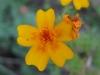 11-novembre-fleurs-2012-17