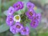 11-novembre-fleurs-2012-18