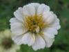11-novembre-fleurs-2012-19