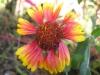 11-novembre-fleurs-2012-2