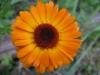 11-novembre-fleurs-2012-20