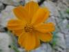 11-novembre-fleurs-2012-21