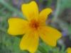 11-novembre-fleurs-2012-23