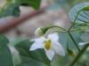 11-novembre-fleurs-2012-24