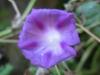 11-novembre-fleurs-2012-25