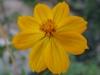 11-novembre-fleurs-2012-26