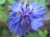 11-novembre-fleurs-2012-8