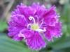 11-novembre-fleurs-2012-9