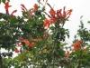 12-d%c3%a9cembre-fleurs-2012-1