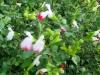 12-d%c3%a9cembre-fleurs-2012-11
