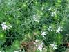 12-d%c3%a9cembre-fleurs-2012-12