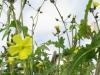 12-d%c3%a9cembre-fleurs-2012-2