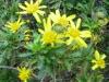 12-d%c3%a9cembre-fleurs-2012-3