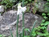 12-d%c3%a9cembre-fleurs-2012-4