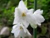 12-d%c3%a9cembre-fleurs-2012-5