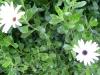 12-d%c3%a9cembre-fleurs-2012-6