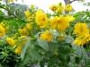 12-d%c3%a9cembre-fleurs-2012-7