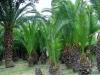 Brin Garden Bordighera (4)