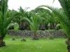 Brin Garden Bordighera (7)