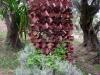 brin-garden-bordighera-3
