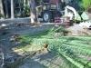 giardino-winter-bordighera-2013-10-25-1