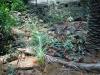 giardino-winter-bordighera-2014-07-09-2