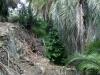 giardino-winter-bordighera-2014-07-09-3
