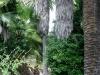 giardino-winter-bordighera-2014-07-09-4