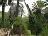 giardino-winter-bordighera-2014-07-09-5