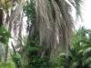 giardino-winter-bordighera-2014-07-09-7