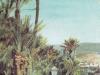 Bordighera Giardino di palme Arziglia