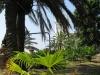 villa-garnier-garden-palmetum