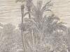 Datteri Phoenix datilifera nel Giardino Winter 1892
