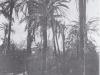 Bordighera palmeto n° 2549